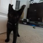 Kitty Cairo